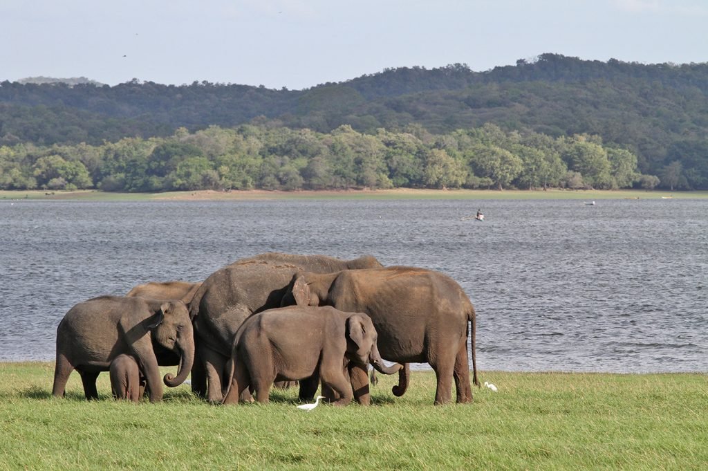 Nationaal Park Sri Lanka Tips