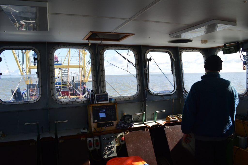 Zeehonden spotten Garnalen vissen Texel