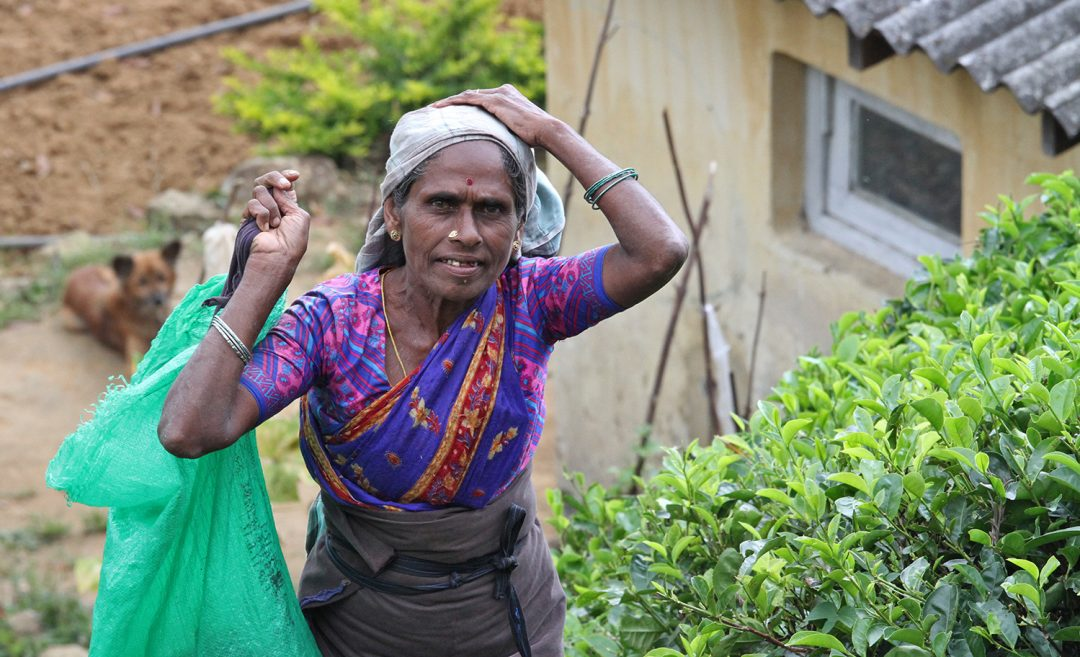 Tips Sri Lanka - Reisverhaal